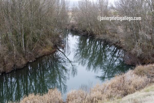 Río Pisuerga. Paisaje entre Cordovilla la Real y Valbuena de Pisuerga. Cerrato palentino. Palencia. Castilla y León. España. © Javier Prieto Gallego