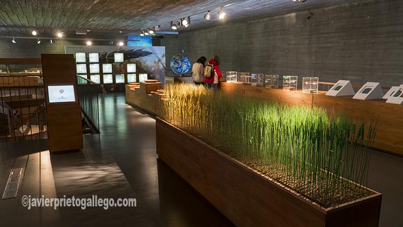 Recursos expositivos del Museo del Pan dedicados a mostrar los distintos tipos de cereal. Mayorga. Valladolid. Castilla y León. España. ©Javier Prieto Gallego