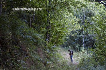 Un hermoso camino junto al río Sella comunica las localidades de Ribota y Oseja de Sajambre. [Parque Nacional de Picos de Europa. León. Castilla y León. España. © Javier Prieto Gallego]