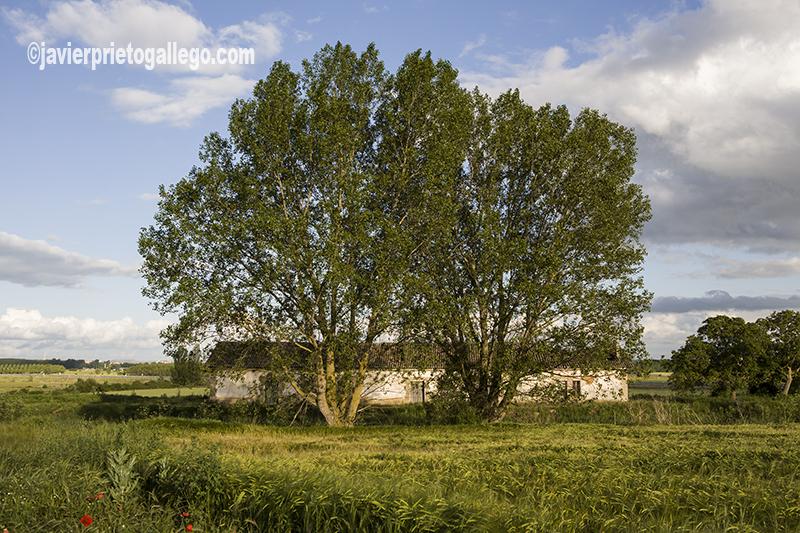 Casas junto al Canal de Castilla cerca Melgar de Fernamental. Burgos.Castilla y León. España © Javier Prieto Gallego