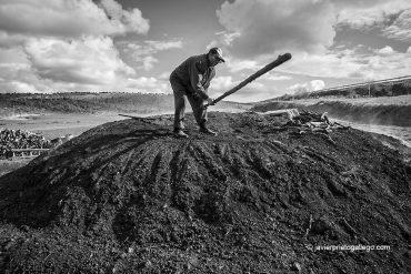 El carbonero José González subido a una de las pocas carboneras que todavía se realizan en Retuerta. Burgos. Castilla y León. España, 2007 © Javier Prieto Gallego;