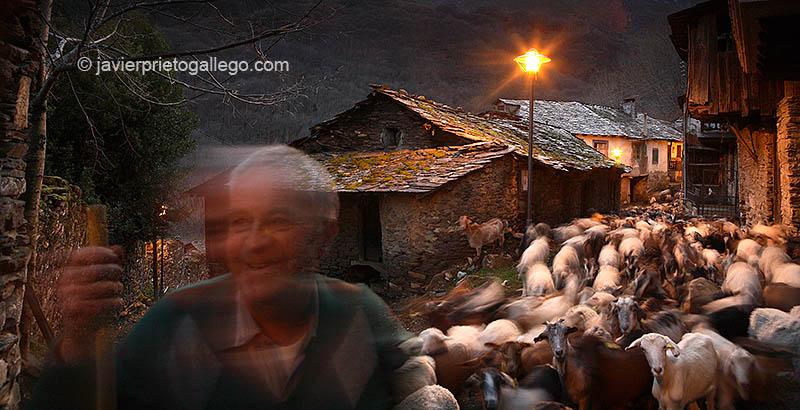 Un pastor y su rebaño de ovejas y cabras regresan a última hora de la tarde a la localidad de Montes de Valdueza. Valle del Silencio. El Bierzo. León. Castilla y León. España © Javier Prieto Gallego