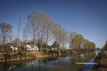 Jinetes de paseo por la sirga del Canal de Castilla en Becerril de Campos. Palencia. Castilla y León. España © Javier Prieto Gallego