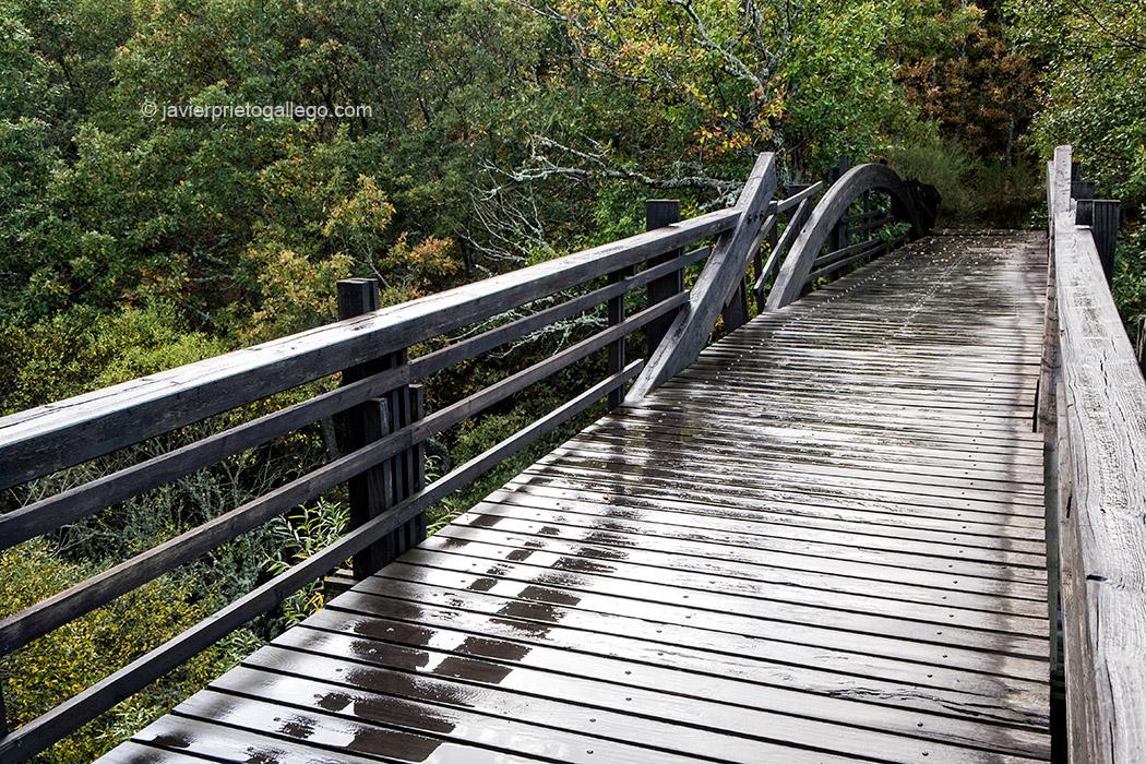 Puente sobre el Rubagón en la Senda de la Pedrosa. Barruelo de Santullán. Palencia. España © Javier Prieto Gallego;