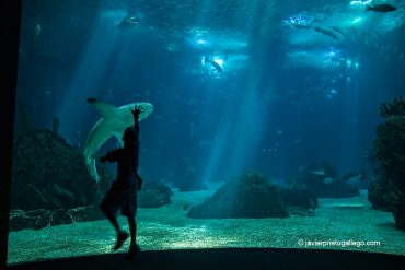 Tiburones en el oceanario de Lisboa. Portugal, 2005 © Javier Prieto Gallego