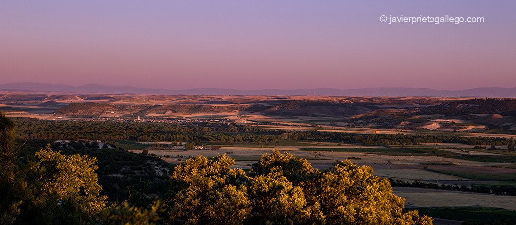 Ribera del Duero. Valladolid. España © Javier Prieto Gallego;