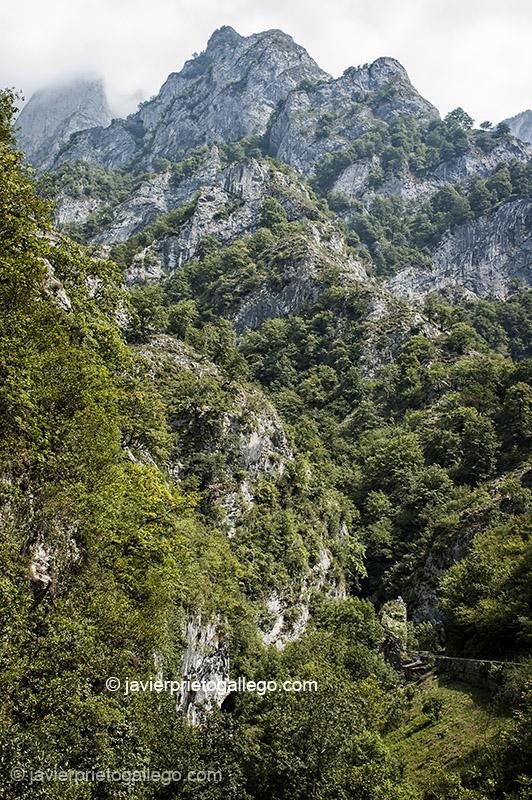 Desfiladero de los Beyos. Oseja de Sajambre. Parque Regional de Picos de Europa. León. Castilla y León. España. © Javier Prieto Gallego