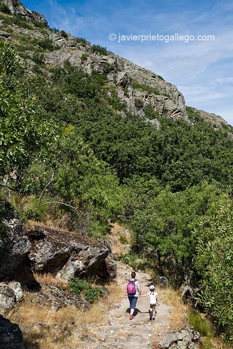 Camino en la Senda de los Monjes. Ribadelago Viejo. Parque Natural de El Lago de Sanabria. Zamora. Castilla y León. España. © Javier Prieto Gallego;