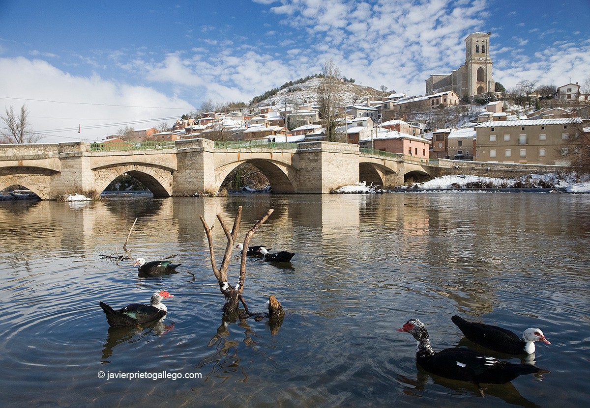 El río Arlanzón a su paso por la localidad de Palenzuela. Burgos. Castilla y León. España © Javier Prieto Gallego