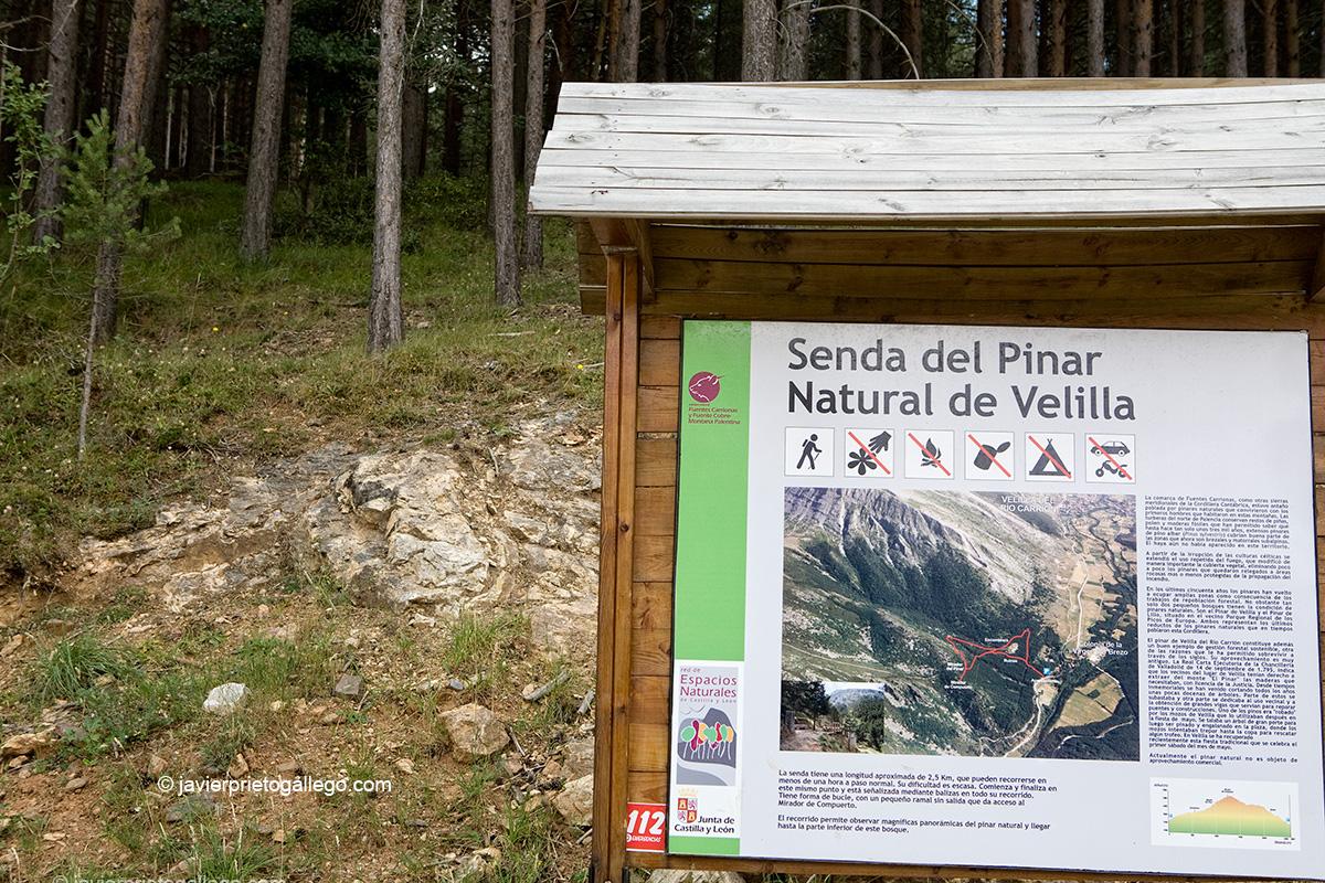 Senda de El Pinar de Velilla. Velilla del Río Carrión. Palencia. Castilla y León. España. © Javier Prieto Gallego