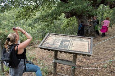 """Cómo hacer el paseo """"Ruta de las Minas"""" (Sabero / León)"""