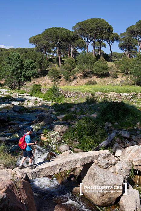 El Hoyo de Pinares. Pinares del río Sotillo. Ávila. Castilla y León. España. © Javier Prieto Gallego