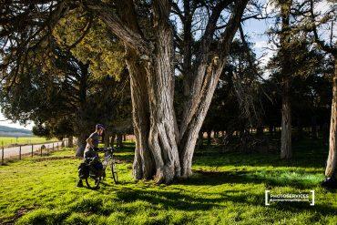 Visitar el Sabinar de Calatañazor (Soria), un bosque de la prehistoria