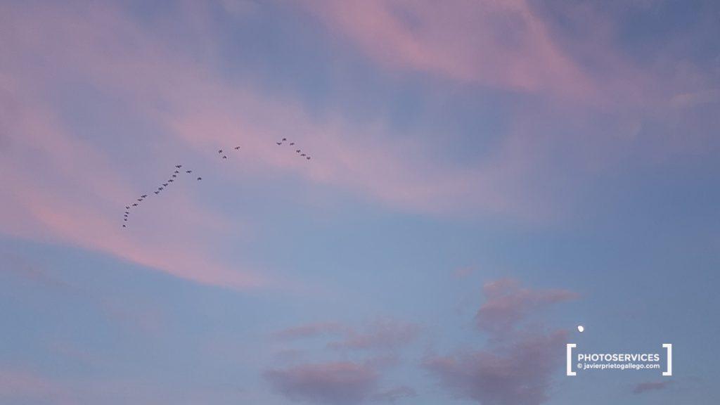 Aves en el cielo de La Albufera al atardecer. Comunidad Valenciana. España. © Javier Prieto Gallego