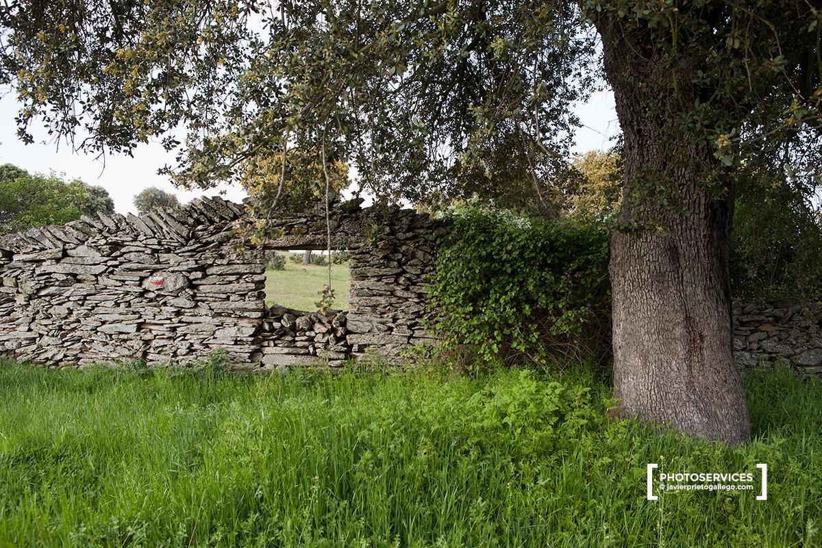 Marcas del GR. 189 en las dehesas que rodean el embalse de Santa Teresa entre Salvatierra y Montejo Río Tormes. Salamanca. Castilla y León. España. © Javier Prieto Gallego.
