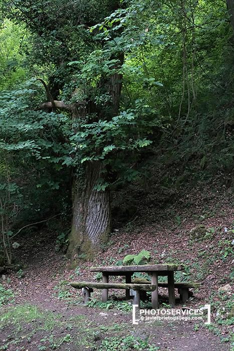 Área recreativa de San Esteban de Cuñaba. Picos de Europa. Asturias. España © Javier Prieto Gallego