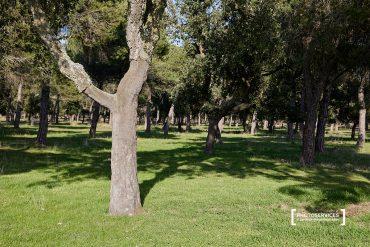 UN PASEO POR EL ALCORNOCAL DE FONCASTÍN (Valladolid)