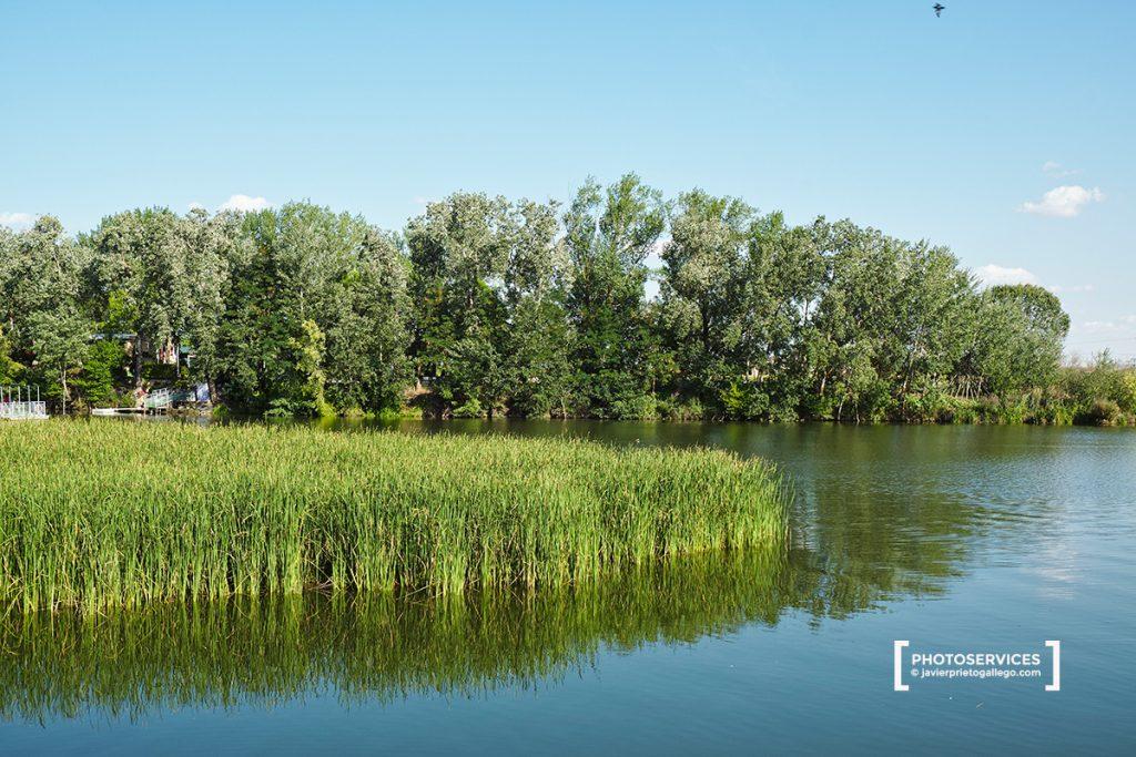 Vegetación en el río a la altura de las islas de Las Pallas y el Club Naútico. Paseo fluvial de Zamora junto a río Duero. Castilla y León. España. © Javier Prieto Gallego