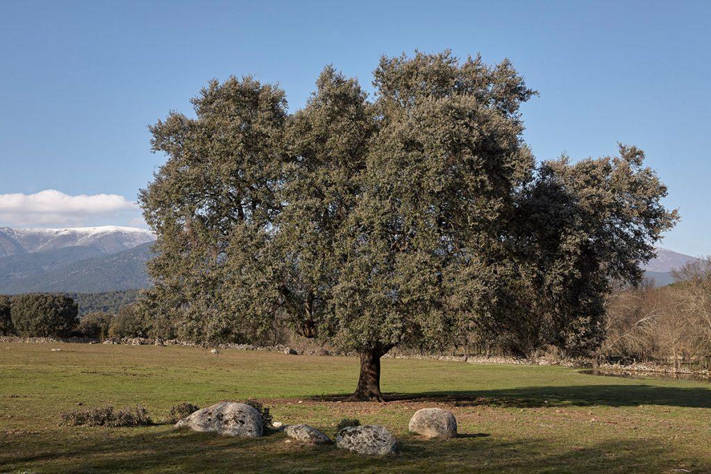 Praderas. La Adrada. Sierra de Gredos. Valle del Tiétar. Ávila.Castilla y León. España. © Javier Prieto Gallego