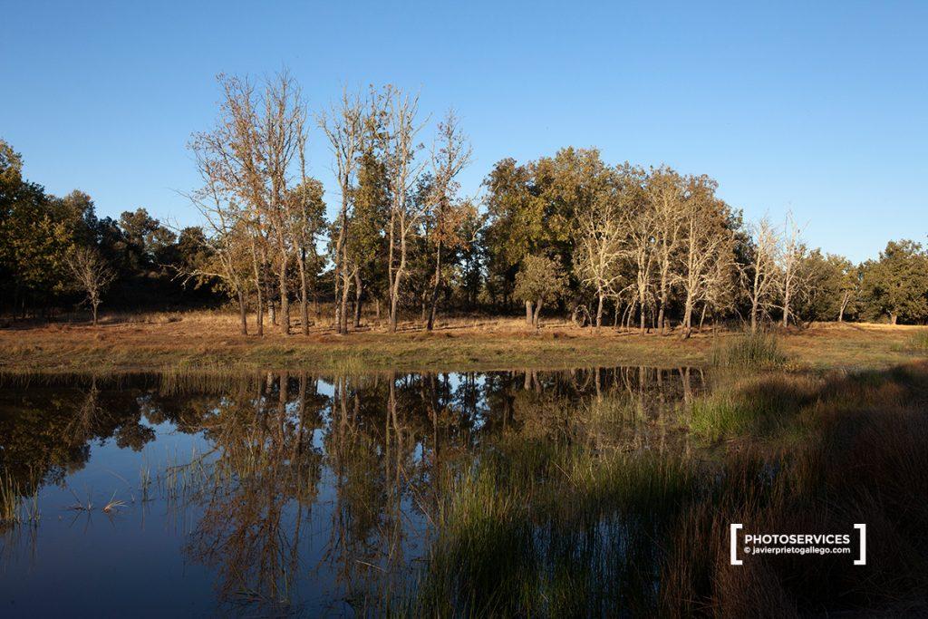 Laguna de Vallaguna, en el Monte de Las Majadas. Localidad de San Pedro de Ceque. Zamora. Castilla y León. España © Javier Prieto Gallego