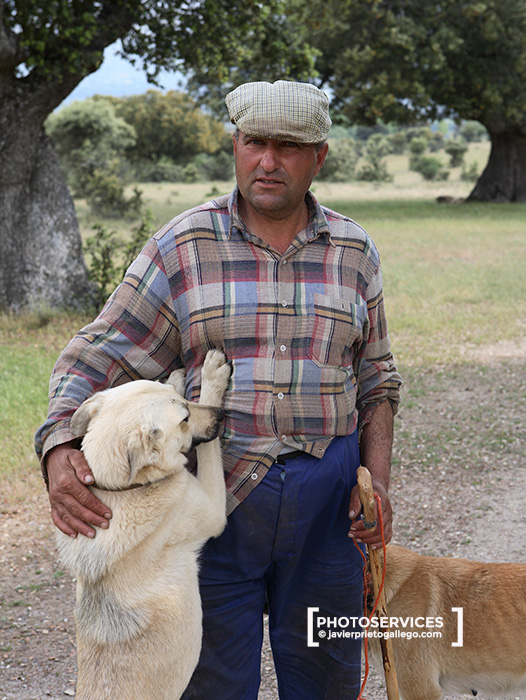 Un pastor en la dehesa boyal. Bonilla de la Sierra. Ávila. Castilla y León. España.  © Javier Prieto Gallego